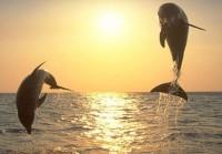 No, to Phuket's Dolphinarium