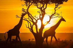 PATA Partners with Africa Travel Association
