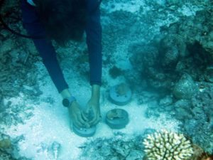 Coral Regeneration Underway at Outrigger Maldives