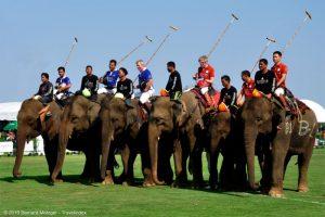 Anantara King's Cup Elephant Polo Tournament Announced