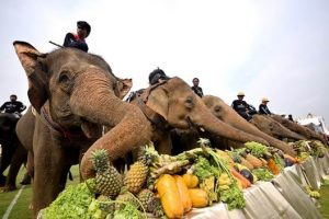 King's Cup Elephant Polo Tournament 2018 Announced