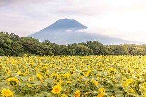 Global Hotel Brands to Boost Japan's Niseko Tourism