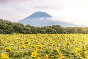 Global Hotel Brands to Boost Japan's Niseko Tourism