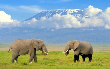 Kenya Tourism Exceeding Global and Regional Levels in 2018 - VisitKenya.com and Travelindex