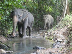 New Partnership Leading the Way to Elephant-friendly Future in Koh Lanta.