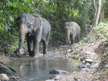 New Partnership Leading the Way to Elephant-friendly Future in Koh Lanta - TRAVELINDEX