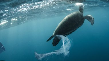 Global Tourism Plastics Initiative Takes On Worst Polluters - TRAVELINDEX