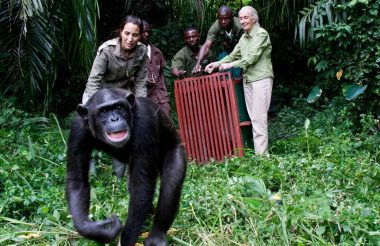 Jane Goodall, The Hope, Premiering on Earth Day - TRAVELINDEX