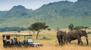 Kenya's Tourism Ministry Launches Virtual Safari Livestream