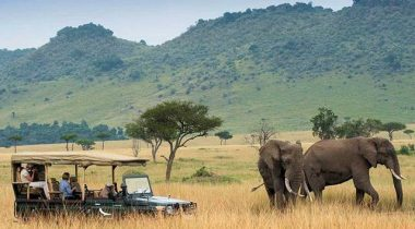 Kenya's Tourism Ministry Launches Virtual Safari Livestream - TRAVELINDEX