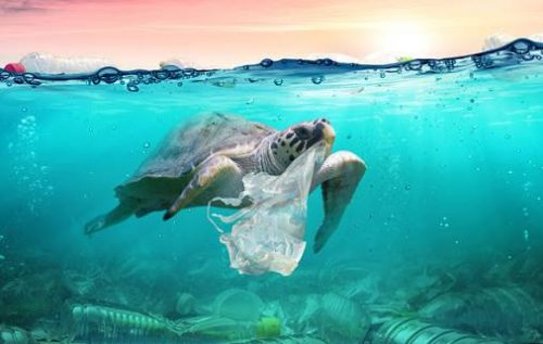 UNWTO: Tourism Sector to Continue Taking Action on Plastic Pollution