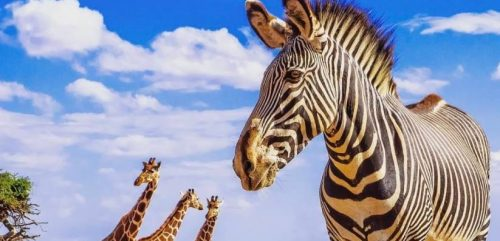 TOURISMAFRICA.org - UNWTO and Google Partner to Restart of African Tourism - TRAVELINDEX