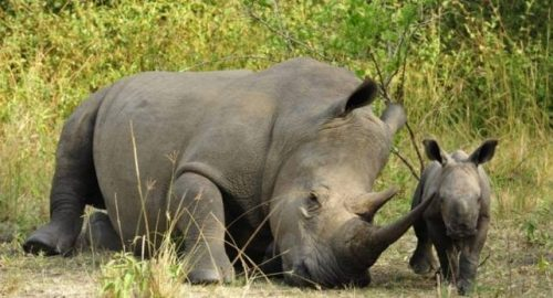 Uganda Wildlife Authority Closes Ziwa Rhino Sanctuary - TRAVELINDEX