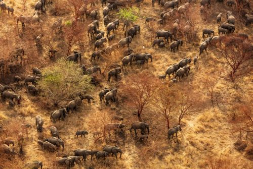 The Wyss Foundation Commits $108M to Protect Areas in Africa