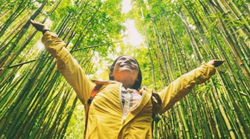 WTTC and Harvard T.H. Chan School Release Papers to Drive Sustainability in Tourism - TRAVELINDEX
